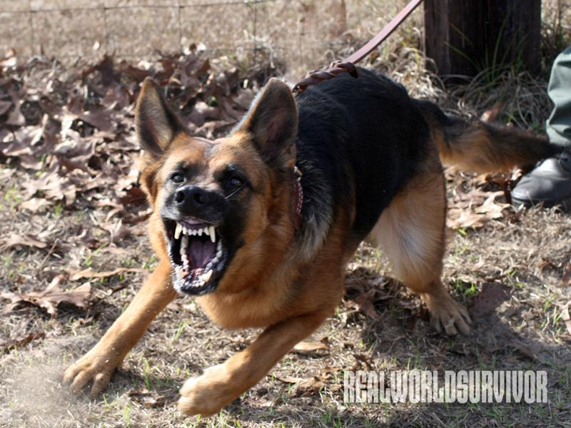 7 Ways To Protect Yourself When A Dog Attacks