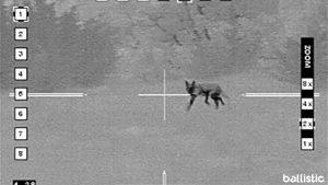 Coyote Hunt, Coyote Hunting, Texas Hunting, predator