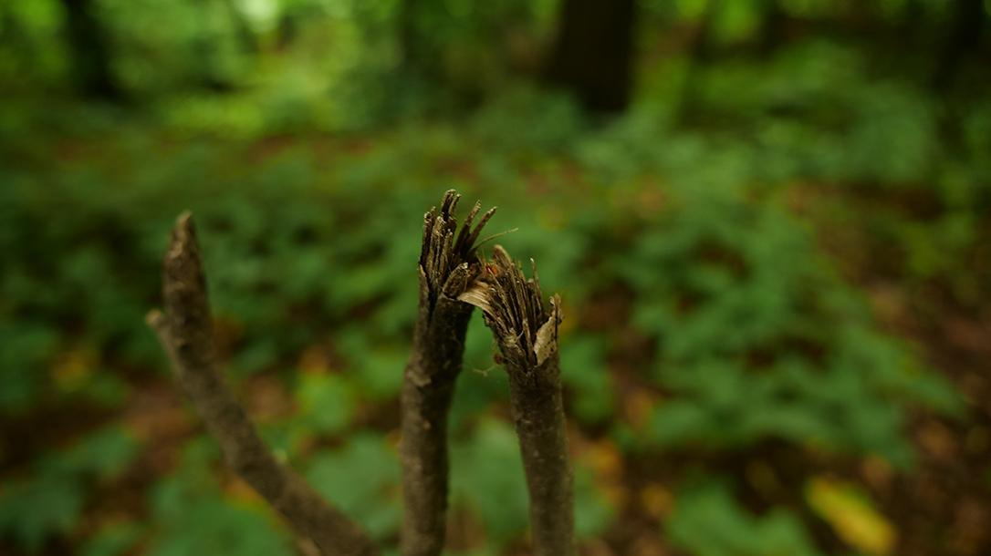 broken branch, wilderness, tracker
