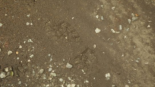 Human Tracking, footprint, wilderness