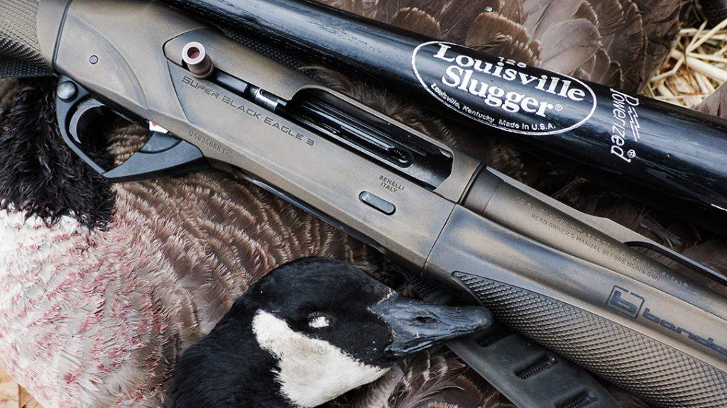 A Benelli Super Black Eagle and Brandon's Louisville Slugger alongside a freshly harvested Canadian Goose.