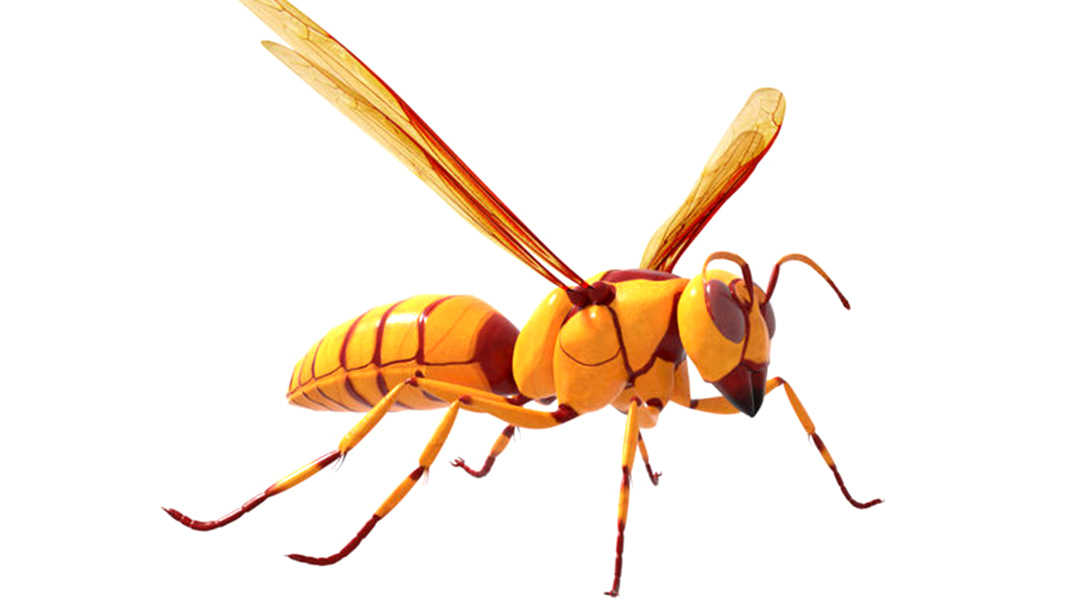 deadly insect wasp