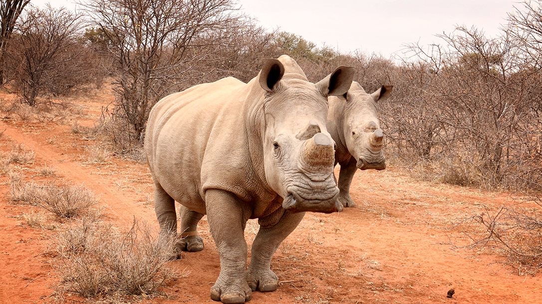 Anti poaching teams like VETPAW work tirelessly to protect endangered animals like rhinos.