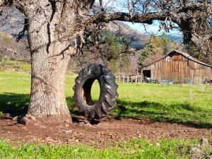 Joint Ventures tire swing