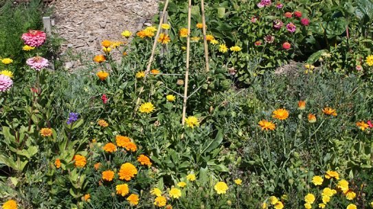 Primer For Permies flower garden lead