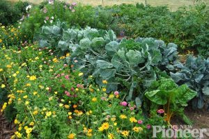 10 ways to grow more crops on ¼ acre lot