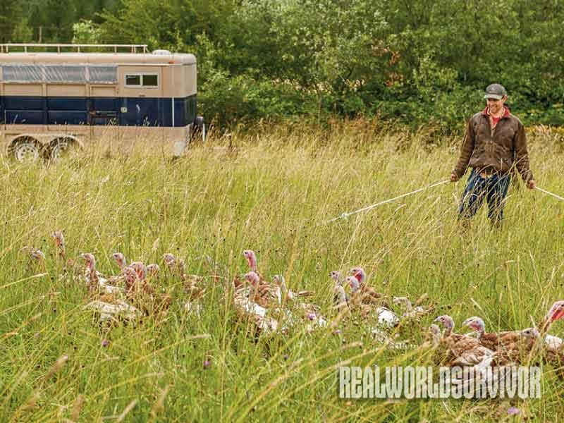 Organic farming, organic poultry