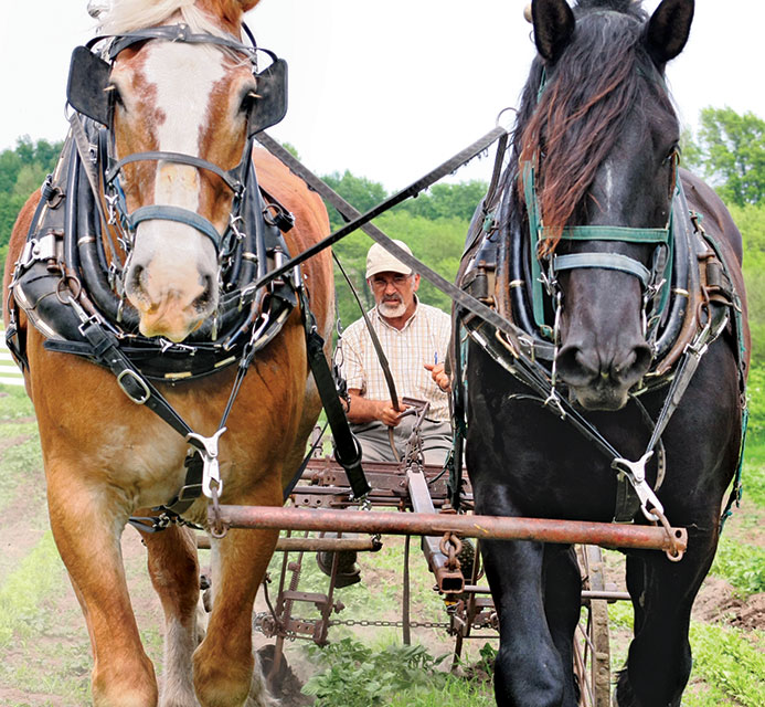 12.horses-closeup