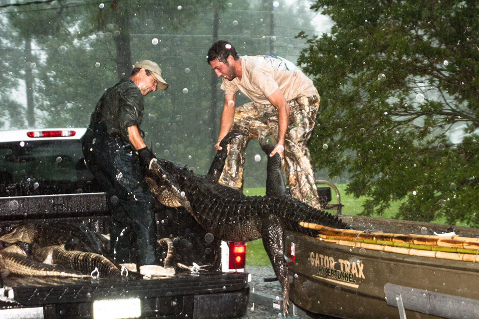 9.oading-10ft-gator-from-boat-to-pickup