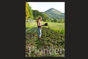 Putting Weeds To Work | Growing Tightly Spaced Veggies