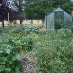No Rows permaculture