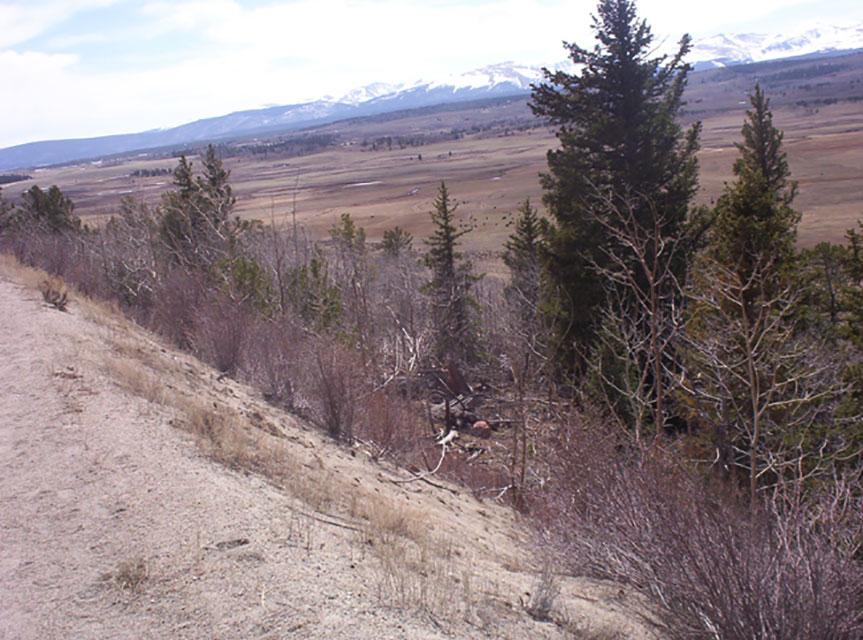 Colorado Aspen Grove