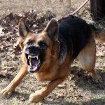 dog breeds, dogs, dog, defense, personal defense, personal & home defense, home defense, guard dog, k9 dog, home defense dog