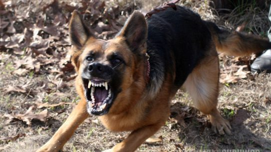 dog breeds, dogs, dog, defense, personal defense, personal & home defense, home defense, guard dog, k9 dog, home defense dog