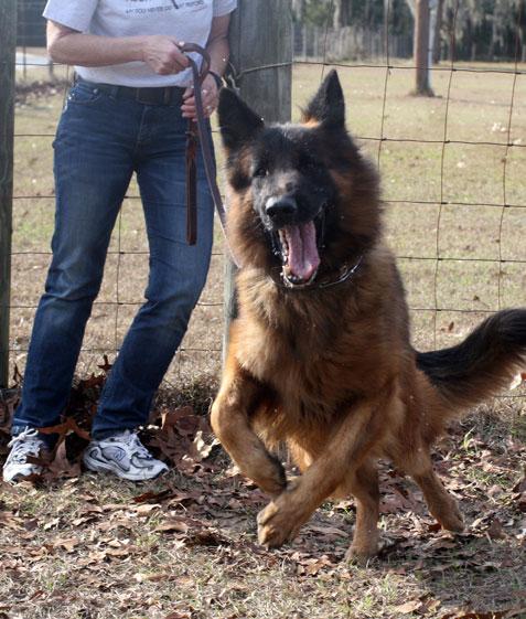Survival Dog Training