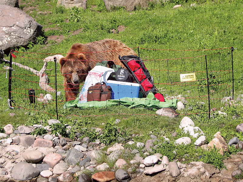 Bear Attack Survival fence