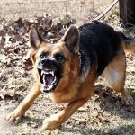 Top 10 Home Defense Tactics dog