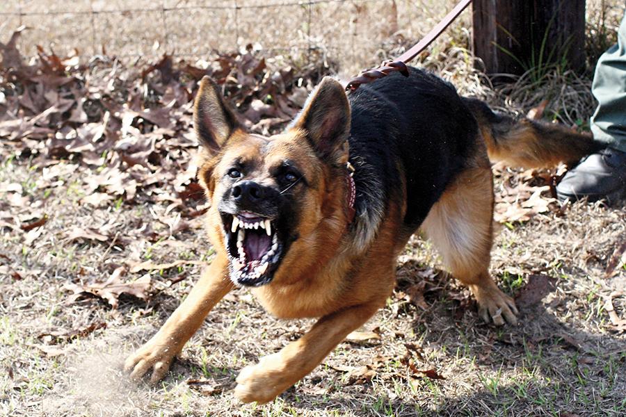 Top 10 Home Defense Tactics dog