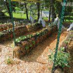 urban mini-farming
