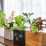 Modern Sprout planters