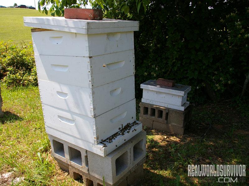 summer beehive