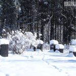 Beekeeping Winterizing