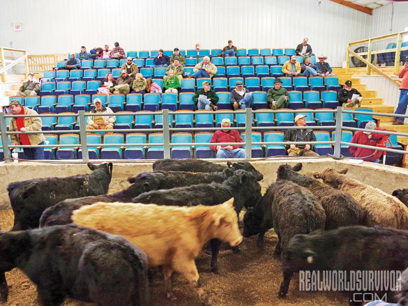 Fauquier Livestock Exchange Fire