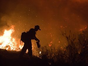Wildfire survival California
