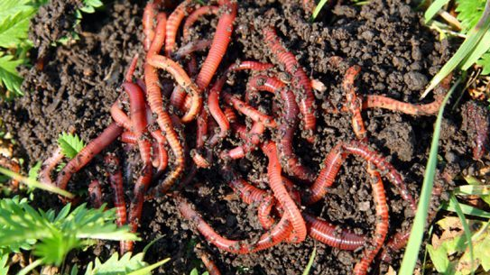 worm farm, worms, fishing bait