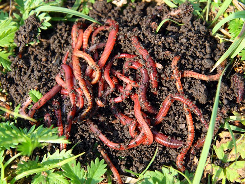 worm farm, worms, fishing bait