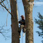 firewood cutting arborist