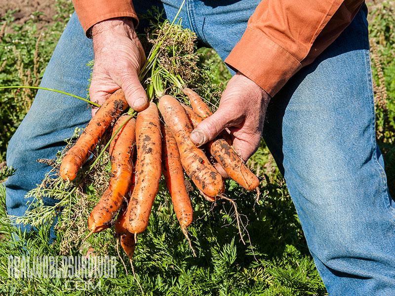 subsistence garden carrots
