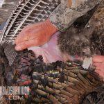 Skinning wild turkey