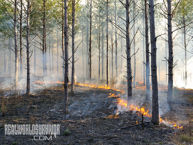 prescribed burn remove trees