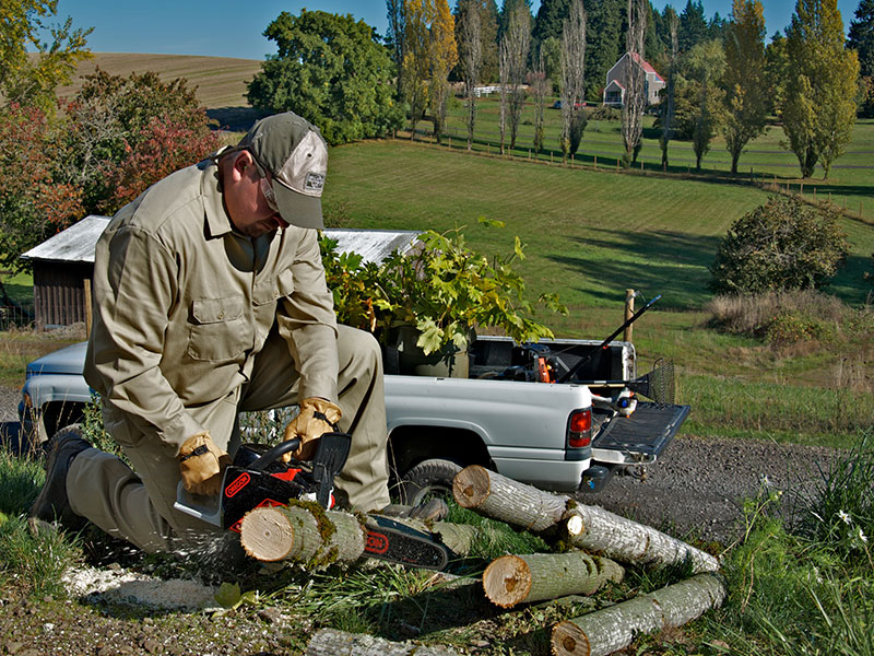 Tree Pruning With A Chainsaw