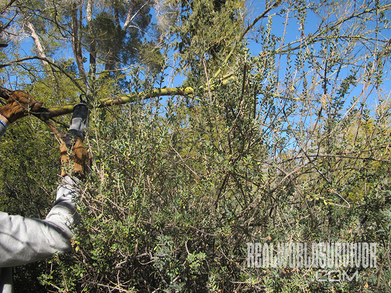 Protective Garments For Tree Pruning