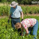 long-term subsistence farming