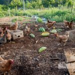build better soil with compost new pioneer 2015