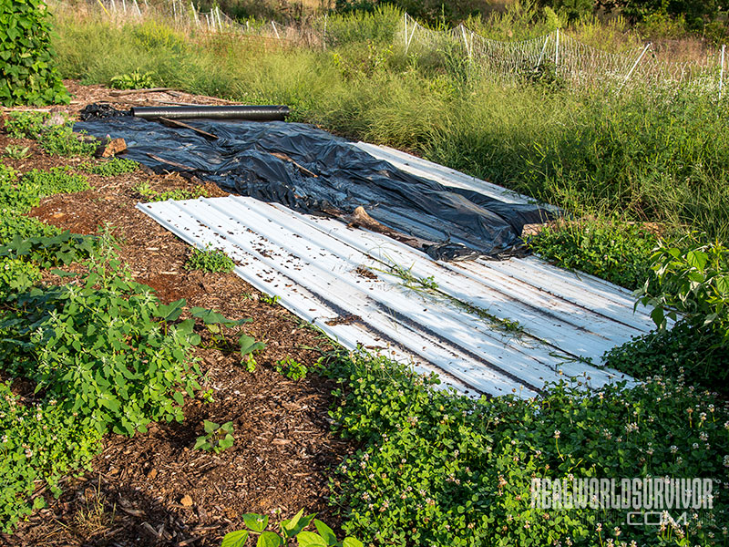 soil-building weed removal