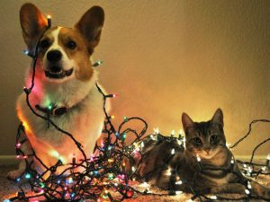 Pets holiday safety