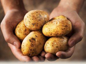 potatoes subsistence garden survival crop