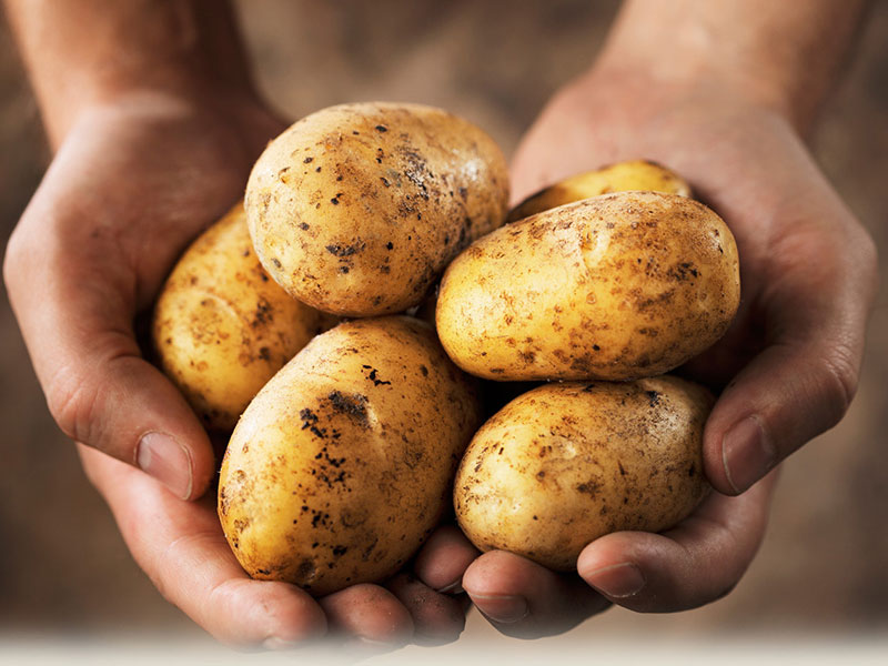 potatoes subsistence garden survival crop