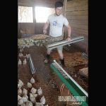 Whiffletree Farm GMO free
