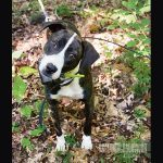 Raising A Mountain Cur