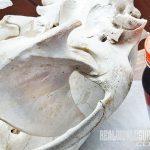 bear skull hooker