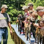 mountain cur dog show