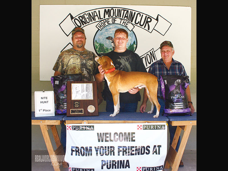 Mountain Cur 'Coon Hunt winner