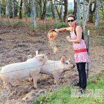 NP spring 2015 pig farming feeding