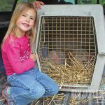 NP spring 2015 pig farming piglets