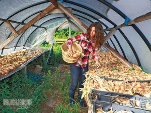 homesteading CSA crops rough draft farmstead